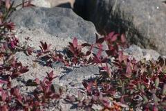 2018-07-13-Kangerlussuaq-17